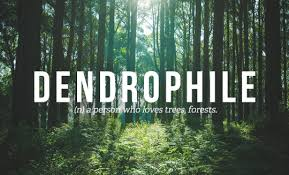 Dendrophile N A Person Who Loves Trees Forests Words Adorable Forest Quotes