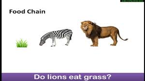 animal food chain. Unique Food Science AnimalPlant Food Chains UrduHindi Class1 Class2 Class3   YouTube In Animal Chain
