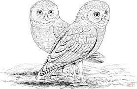 Burrowing Owl Coloring Page Free Printable Pages Best Of