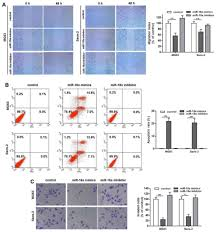 Microrna 18a Inhibits Cell Growth And Induces Apoptosis In