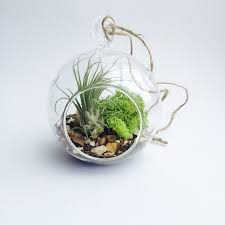 4 inch hanging air plant globe terrarium 4 5 inches 6 inch diy indoor planter vases with air plants moss succulent in bonsai from home garden on
