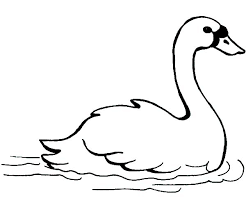 Small Picture Swans Swimming Fast Coloring Pages Batch Coloring