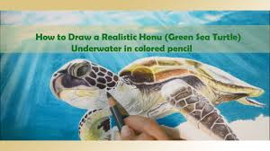 Small Picture How to Draw a Realistic Honu Green Sea Turtle Underwater in