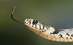 cute snake wallpaper. Brilliant Cute Awesome Snake Wallpaper With Cute A