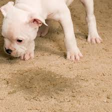 cleaning pet stains from carpet