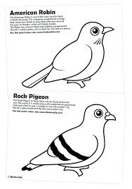 Birds Coloring Bird Coloring Pictures Free Printable Pages Realistic