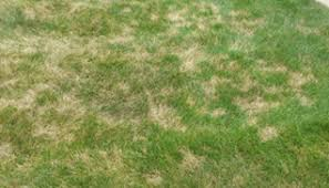 2019 Newsletter Grub Control Lawn Doctor Of Westerville