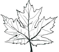 maple leaf coloring page pages red printable to tiny fall harvest co