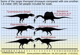 carcharodontosaurus size spinosaurus