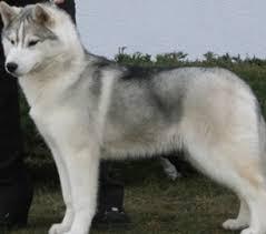 new husky puppy need names