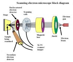 Scanning Tunneling Microscope Vs Scanning Electron Microscope