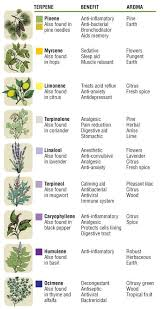 Essential Oil Benefits Chart Common Essential Oil Terpene Quick Reference Chart