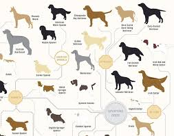 Kinds Of Dogs Chart 181 Breeds Of Dog On One Awesome Poster Infographics