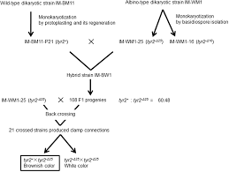 Genetic Analyses Of Causal Genes Of Albinism White Fruiting