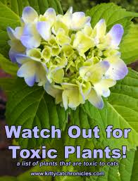 Watch Out For Toxic Plants Kitty Cat Chronicles