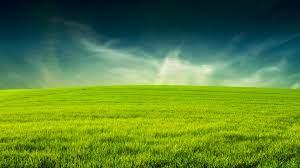 Hd Grass wallpapers - HD wallpaper ...