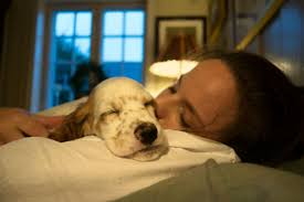 Should I Let My <b>Dog</b> Sleep With Me? – American Kennel Club