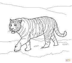 Small Picture Siberian Animal Coloring Pages Tiger Coloring Page 4 nebulosabarcom