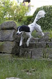traumeel oder zeel bei arthrose hund