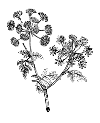 Free Flower Illustrations Download Free Clip Art Free Clip Art On