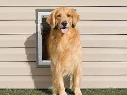 the best dog door options for the home