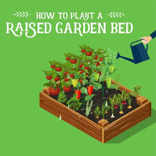 generously water your new raised garden bed immediately after you are finished planting