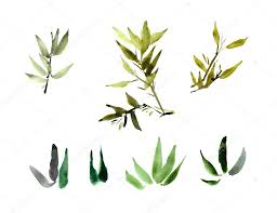 watercolor bamboo plant leaves stock photo
