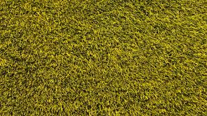 grass texture hd. 2560x1440 Wallpaper Lawn, Grass, Texture, Green Grass Texture Hd