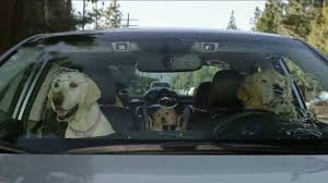 2018 subaru dog commercial. interesting commercial in 2018 subaru dog commercial