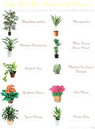 air cleaning plants safe for cats low light indoor plants safe for pets