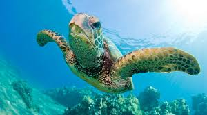 Image result for turtle