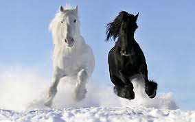 white horses in snow. Beautiful Horses Image Is Loading Poster19034x13034Blackand And White Horses In Snow L