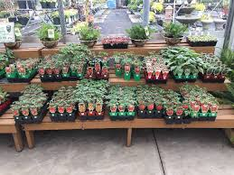 zainos garden center westbury newyork