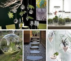 hanging terrarium living room designer