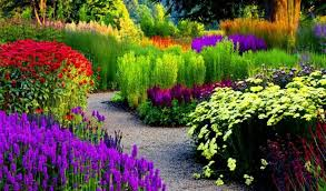 12 designed flower garden blooming a variety of multicolored flowers