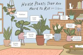 Extremely Low Light Plants 6 Houseplants Anyone Can Grow