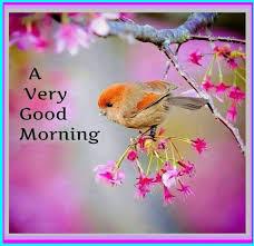 a very good morning wg16017