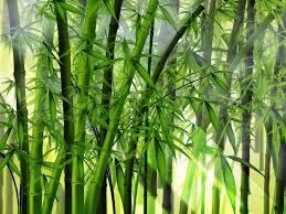 collage feng shui. Les Plantes Feng Shui Pour Un Intérieur Harmonieux Collage