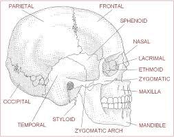 Wiki-Health-Fabulous - Anatomy Worksheets