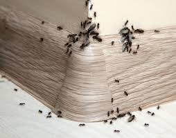 take care to keep the mixture away from areas accessible to children and pets this is a guide about getting rid of sugar ants in the kitchen