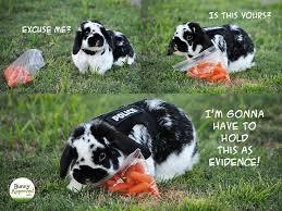 Bunny Memes | Bunny Approved – | Bunnies | Pinterest | Bunny Meme ... via Relatably.com