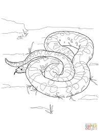 Anaconda Coloring Page - qlyview.com