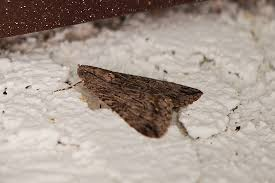 Small Moths In Bedroom 15 Proven Home Remedies To Get Rid Of Moths