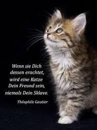 48 Spruch Trauer Katze