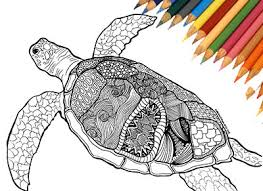 Small Picture coloring page turtle coloring page coloring book adult