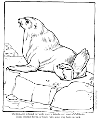Small Picture Sea Lion coloring pages Zoo animals SeaLake Shore
