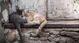 Image result for sad abandoned cat