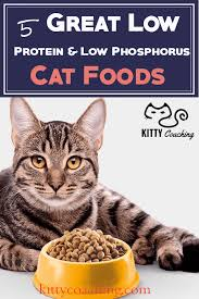 low protein cat food. Low Protein Phosphorus Cat Food Review A