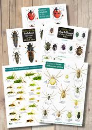 Bugs X5 Laminated Id Chart Including Ladybirds Grasshoppers Spiders Etc Normal Price 20 00 When Purchased Separately