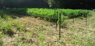 electric fence for garden. 4 Wire Electric Fence For Garden